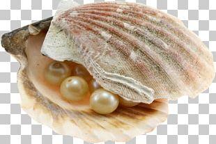 Dubai Abu Dhabi Pearl Journey Oyster Pearl Hunting PNG
