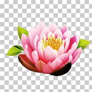 Flower Icon PNG