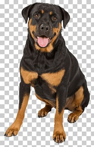 The Rottweiler Puppy German Shepherd Dachshund PNG