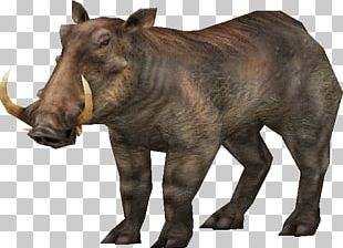 Carnivores Ice Age Wild Boar Carnivores: Dinosaur Hunter Spinosaurus PNG