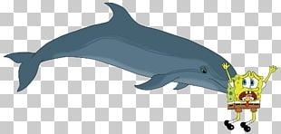 Common Bottlenose Dolphin The Bottlenose Dolphin Southern Right Whale Dolphin PNG