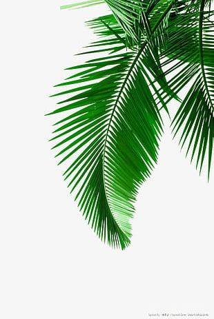 Green Palm Leaves Material PNG
