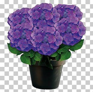 French Hydrangea Purple Flowerpot Violet PNG
