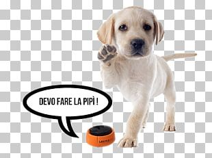 Labrador Retriever Puppy Cairn Terrier Golden Retriever Stock Photography PNG