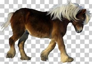 American Miniature Horse Pony Foal Colt Stallion PNG