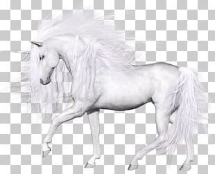 Horse Unicorn Transparency And Translucency Pegasus PNG