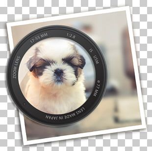Shih Tzu Motion Blur Photography PNG