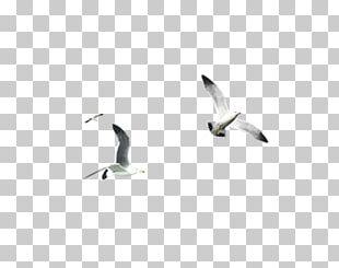 Water Bird Beak Font PNG