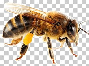 Honey Bee Insect Swarming Yellowjacket PNG