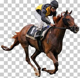 Thoroughbred Horse Racing Jockey PNG