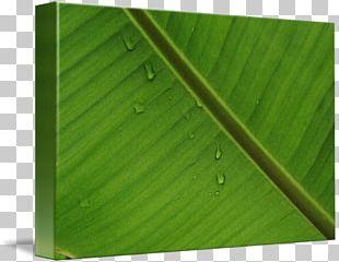 Banana Leaf Wood Green PNG