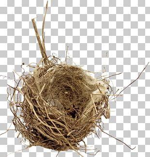 Bird Nest Empty Nest Syndrome Edible Bird's Nest PNG