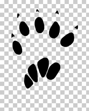 Squirrel Paw Dog Animal Track PNG