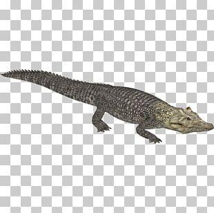 Zoo Tycoon 2 Crocodiles Nile Crocodile Alligator PNG