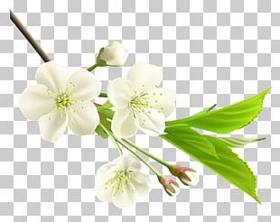 Flower White PNG