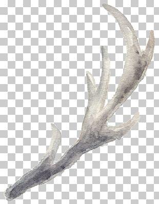 Antler Reindeer Watercolor Painting Pxe8re Davids Deer PNG