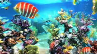 Aquariums Coral Reef Akwarystyka Morska PNG