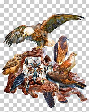 Bird T-shirt Painting Art Seattle Seahawks PNG