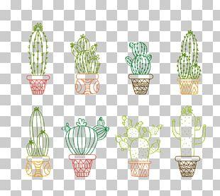 Drawing Cactaceae Succulent Plant Illustration PNG