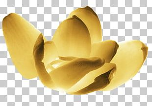 Chanel Grasse Orange Blossom Perfume Food PNG