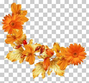 Autumn Leaf Color Flower Frames PNG