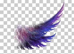 Buffalo Wing PNG