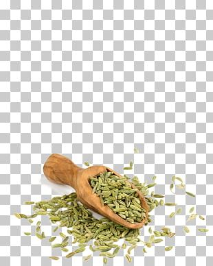 Spice Falafel Herbalism Alternative Health Services Medicine PNG