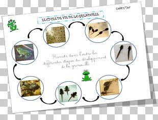 School Kindergarten Game Frog Identity Document PNG
