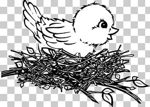 Bird Nest Bird Nest Drawing PNG