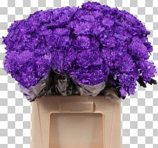 Lavender Flower Violet Hardy Chrysanthemums Lilac PNG