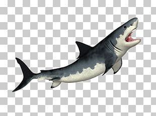 Tiger Shark Megalodon Shark Fin Soup Great White Shark PNG