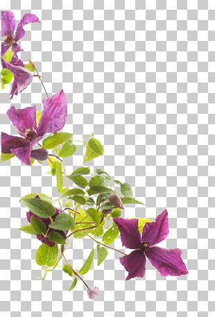 Flower Stock Photography Clematis Viticella PNG