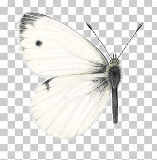 Brush-footed Butterflies Pieridae Moth Butterfly PNG