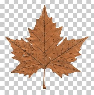 Faded Maple Leaf PNG