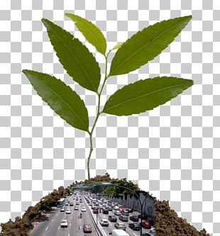 Natural Environment Ministry Of The Environment Sustainability Climate Change Superintendencia Del Medio Ambiente De Chile PNG