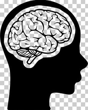 Midbrain Cognitive Training Human Head Human Brain PNG
