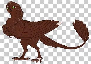 Bird Of Prey Beak Feather Cartoon PNG
