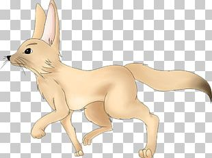 Dog Fennec Fox Fur Pet PNG