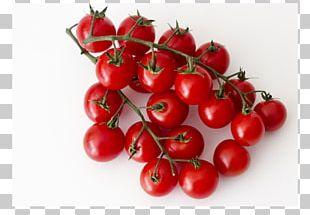 Bush Tomato Cherry Tomato Variety Barbados Cherry PNG