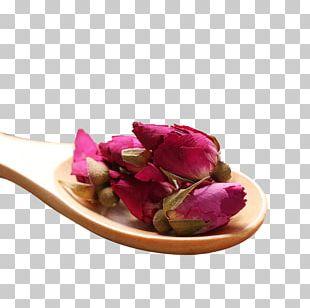 Flowering Tea Beach Rose Shandong PNG