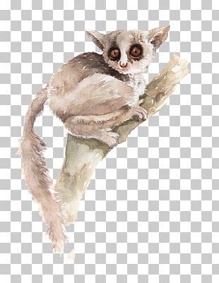 Koala Watercolor Painting Illustration PNG