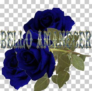 Blue Rose Poemas De Amor Garden Roses Cut Flowers PNG
