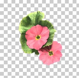 Flower Painting Petal PNG