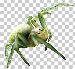 Spider Web Desktop Display Resolution PNG