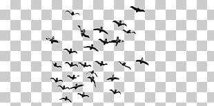 Bird Flight Bird Flight Flock PNG