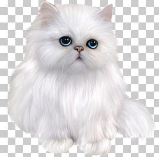 Persian Cat Exotic Shorthair Siamese Cat Himalayan Cat Asian Semi-longhair PNG