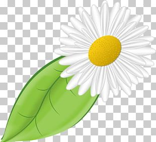 Daisy Family German Chamomile Flower PNG