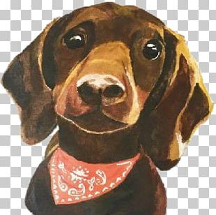 Treeing Walker Coonhound Redbone Coonhound Dachshund Dog Breed Black And Tan Coonhound PNG