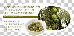 Vegetarian Cuisine Leaf Vegetable Natural Foods Superfood PNG