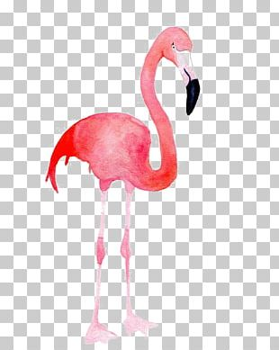 Flamingo Blue Pink Color PNG